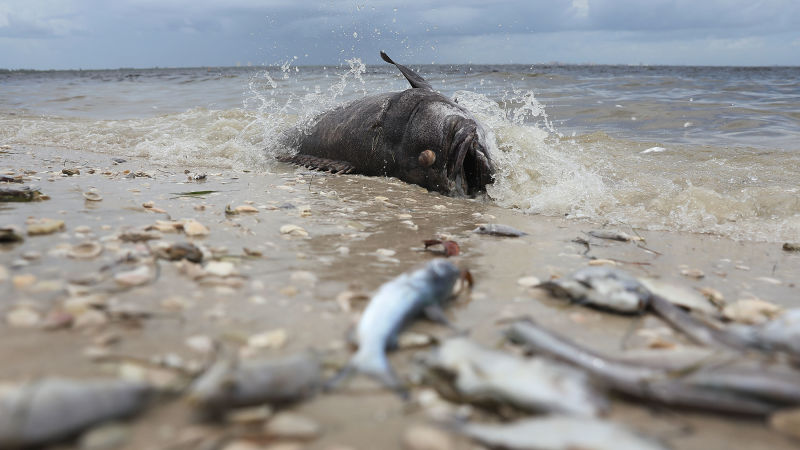 Thoughts of science…Red Tide plaguing Florida shores